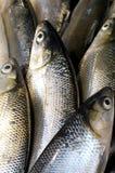 Fresh fish. Close up set of  fresh fish Stock Photo