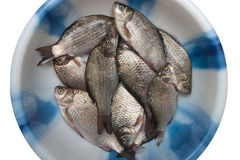 Fresh fish Royalty Free Stock Image