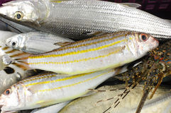Fresh fish. Pacific pile fresh fish background Royalty Free Stock Image