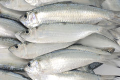 Fresh fish. Background of - Pacific fresh fish Stock Photos