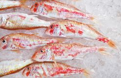 Fresh Fish Stock Image