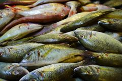 Fresh Fish. In a fish morning fish market royalty free stock photography