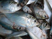 Fresh fish. On ice on the market Stock Photo
