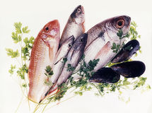 Fresh Fish. Still life of fresh fish Royalty Free Stock Photography