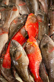 Fresh Fish. For sale in a market Royalty Free Stock Photo