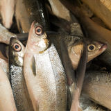 Fresh Fish. Fresh milk fish sold in a fish market Stock Images