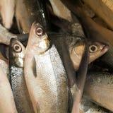 Fresh Fish Stock Images