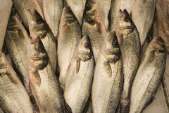 Fresh Fish. Display of Fresh Fish at the fish market Royalty Free Stock Images