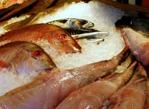 Fresh Fish. Fresh red snapper and monkfish on a fish stall in the market Royalty Free Stock Photo