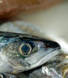Fresh fish. Head with big eyes Royalty Free Stock Photo