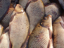 Fresh fish. On the market royalty free stock photography