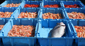 Fresh fish. Of Barcelona fishermans Stock Images