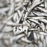 Fresh Fish. Abundance of fresh fish on market display. Royalty Free Stock Photo