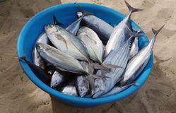 Fresh fish  in Africa Stock Photo