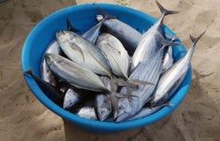 Fresh fish  in Africa Stock Photo