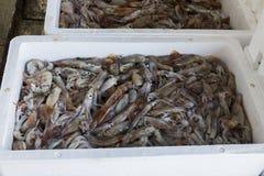 Fresh Fish And Shellfish In Cambrils Harbor, Tarragona, Spain. Stock Photos
