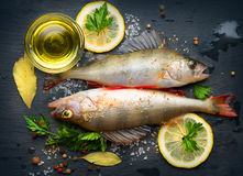 Fresh fish with aromatic herbs, spices, salt. Raw perches Stock Photography