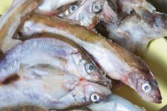 Fresh fish as abstract background. royalty free stock images