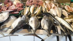 Fish in Asian market. Fresh fish in Asian market. Sale of fresh sea fish in the Asian public store. Sea fish lying on the shopboard at one of the street markets Stock Photos