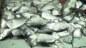 Fish in Asian market. Fresh fish in Asian market. Sale of fresh sea fish in the Asian public store. Sea fish lying on the shopboard at one of the street markets Stock Image