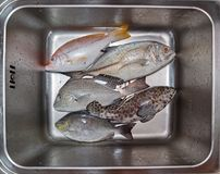 Fresh fish assortment in metal basin with water Stock Photos