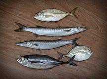 Fresh fish assortment Royalty Free Stock Photo