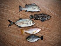 Fresh fish assortment Royalty Free Stock Photography