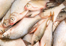 Fresh fish background Royalty Free Stock Photography