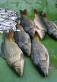 Fresh fish on banana leaves Stock Photography
