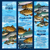 Vector banners of fish catch for sea food maket Stock Photos