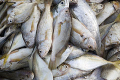 Fresh fish in a basket. Stock Photography