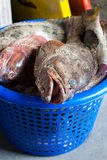 Fresh fish in the basket Royalty Free Stock Photo