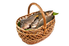 Fresh fish in a basket. Isolated in white Royalty Free Stock Photo