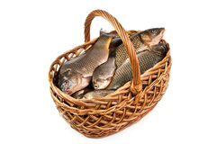 Fresh fish in a basket. Isolated in white Stock Photos