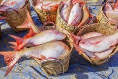Fresh Fish in basket at Long Hai fish market Stock Photo