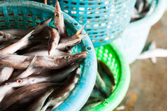 Fresh fish in a basket Stock Photos