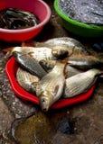 Fresh fish in a basket in a street market in Hanoi, Vietnam Stock Image