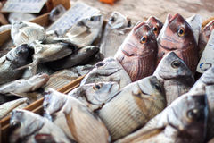 Fresh fish in box Stock Photography