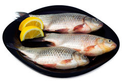 Fresh fish - bream with lemon wedges Royalty Free Stock Photos