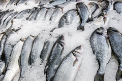 Fresh fish carcasses lie on ice crumbs Royalty Free Stock Photography