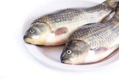 Fresh fish, carp Royalty Free Stock Images