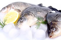 Fresh fish carp on a white background and ice and lemon Royalty Free Stock Photo