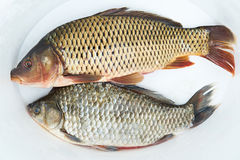 Fresh fish carp Royalty Free Stock Photo