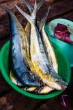 Fresh fish catch Royalty Free Stock Photo