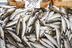 Fresh fish catch Royalty Free Stock Photos