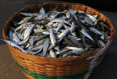 Fresh fish catch in a wicker basket Stock Images