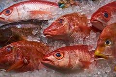 Fresh fish1a. Fresh caught fish at the market Stock Image