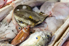 Fresh fish close-up in the market Stock Image