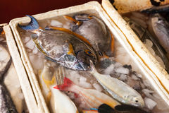 Fresh fish close-up in the market Stock Photography