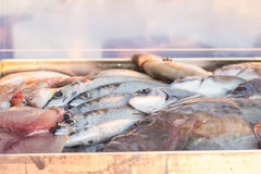 Fresh fish closeup Royalty Free Stock Photo